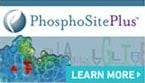 PhosphoSite Plus