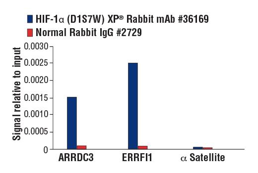 HIF-1a ChIP data