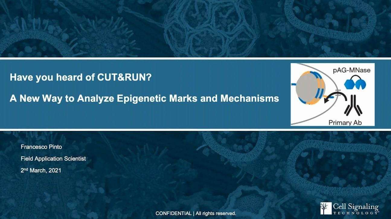 [Cell Signaling Technology] CUT&RUN