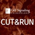 [Cell Signaling Technology] CUT&RUN assay를 소개합니다!