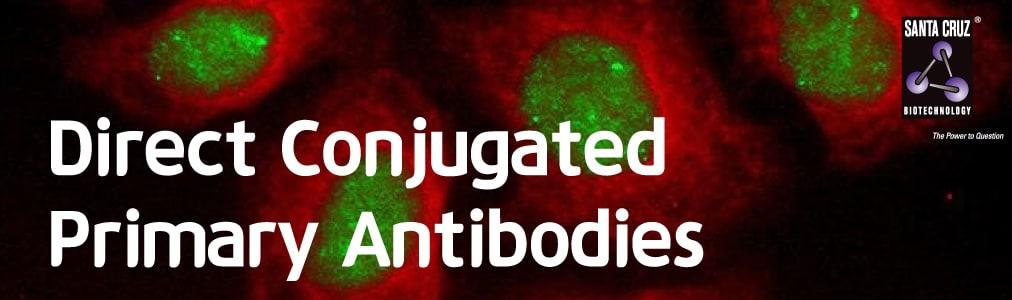 Direct-conjugated-primary-antibody-image