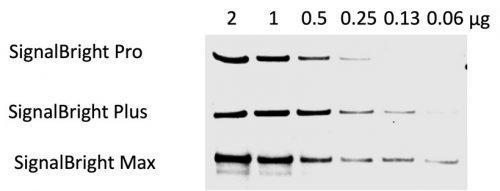 Comparison of proteintech's ECL